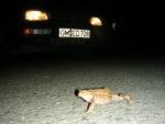 Rette die Welt - Amphibienwanderung