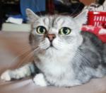 Tiere in der Magie: Katzen